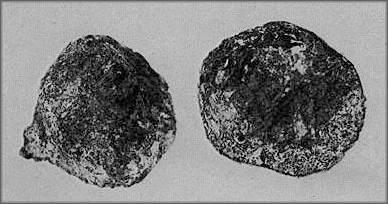"""Des découvertes archéologiques """"Improbables"""" pour l'époque? Artefact_de_coso_decoupe"""